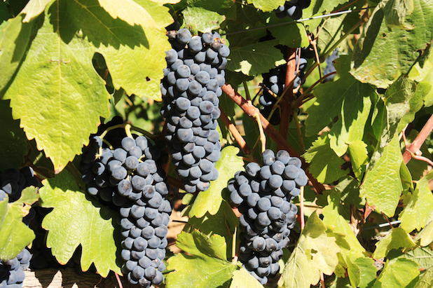 grapes-protuguese-wine